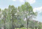 Le parc urbain de Carrières Centralité sera conçu par I'agence Ilex